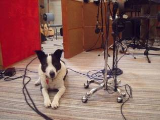 Security at the Old World recording session. Tom Callwood's dog, Spud.